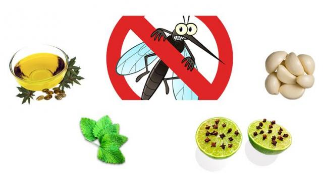 4 Natural Mosquito Repellents to Try