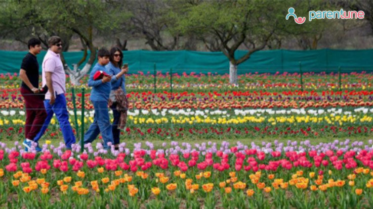 Celebrate Tulip Festival In Kashmir With Your Child