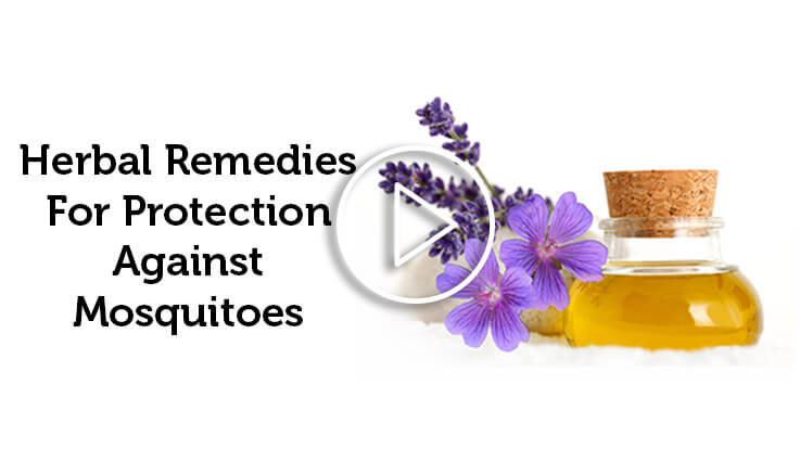 Herbal Remedies for Protection Against Mosquitoes