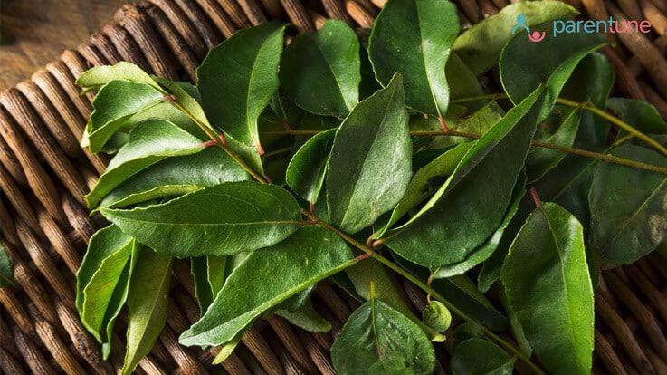 क्या हैं करी पत्तेCurry Leaf के चमत्कारिक औषधीय गुण फायदे और उपयोग