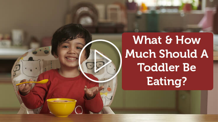 What And How Much Should A Toddler Be Eating