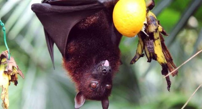 Why Preparedness Against Nipah VirusNiV or other is Vital Rather Blind Rely on Vaccines