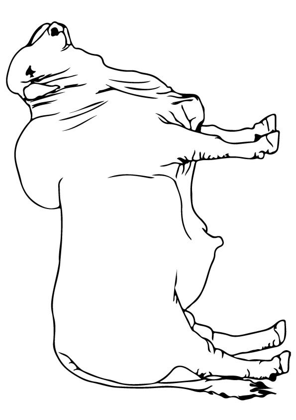 Standing Bull coloring pages