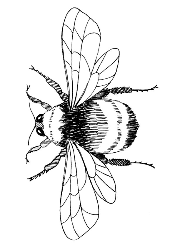 Flying Bee coloring pages