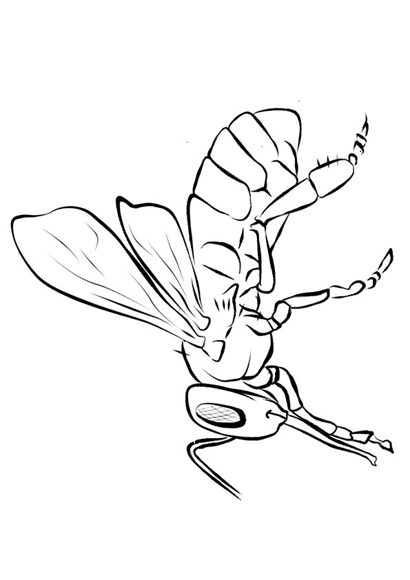 Gaint Bee coloring pages