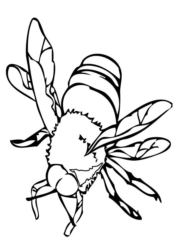 Dangerous Bee coloring pages