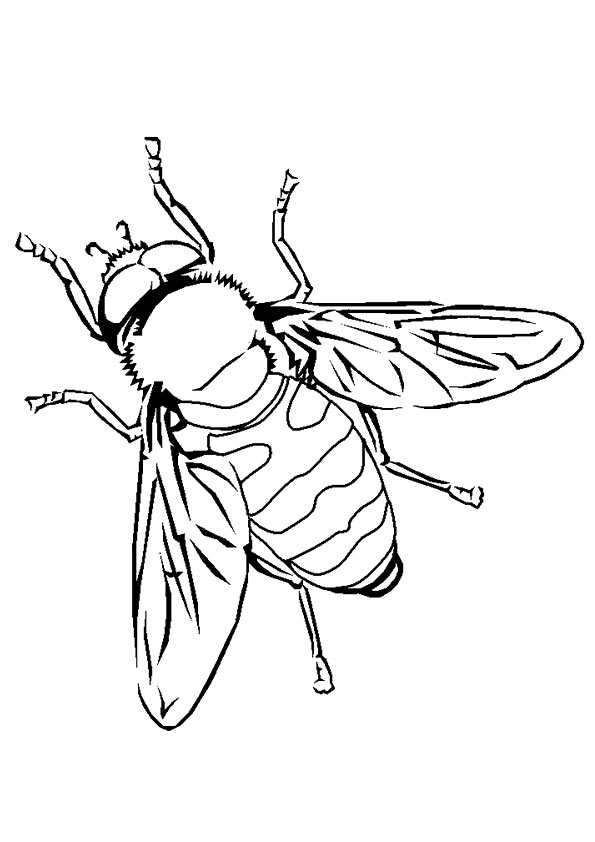Simple Bee coloring pages