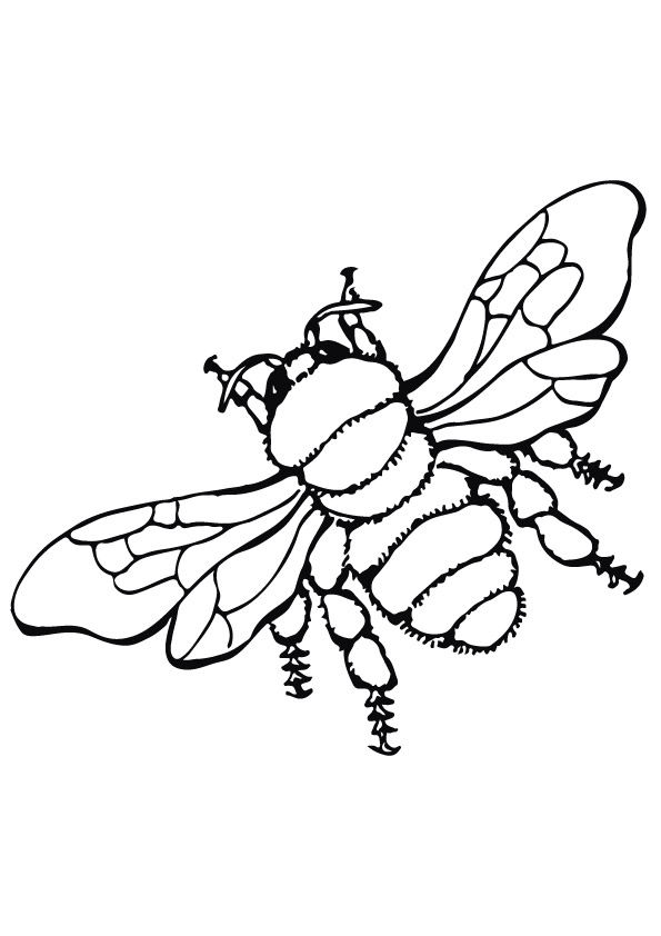 Parentune - Free & Printable On Air Bee Coloring Picture, Assignment Sheets  Pictures For Child
