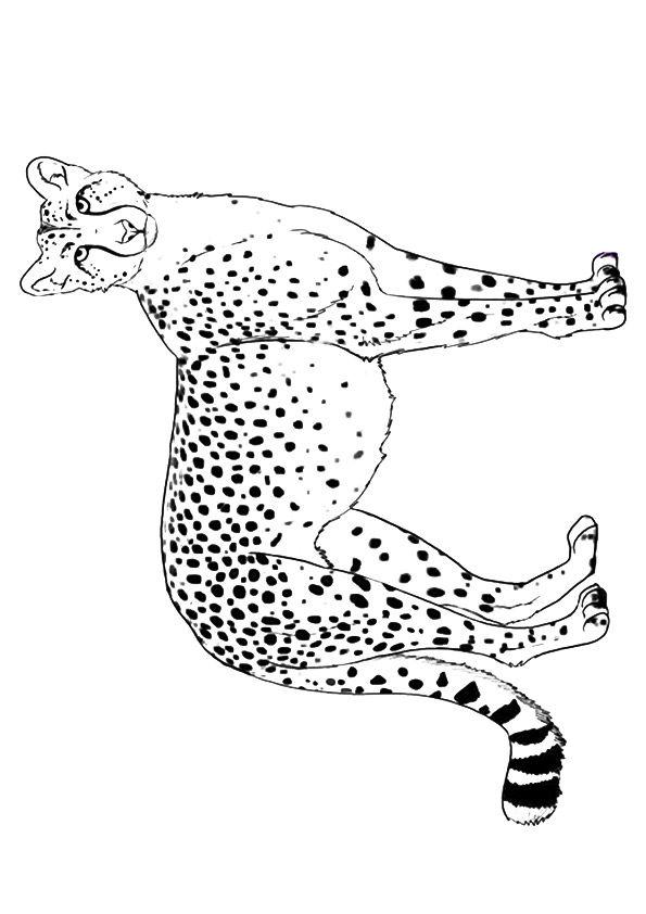 Cautious Cheetah