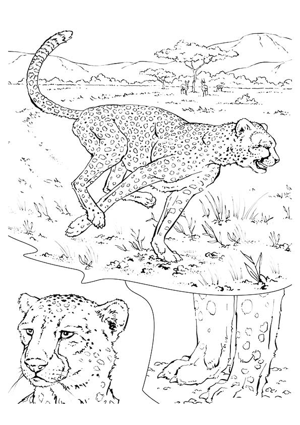 Parentune - Free & Printable Cheetah In Jungle Coloring Picture, Assignment Sheets  Pictures For Child
