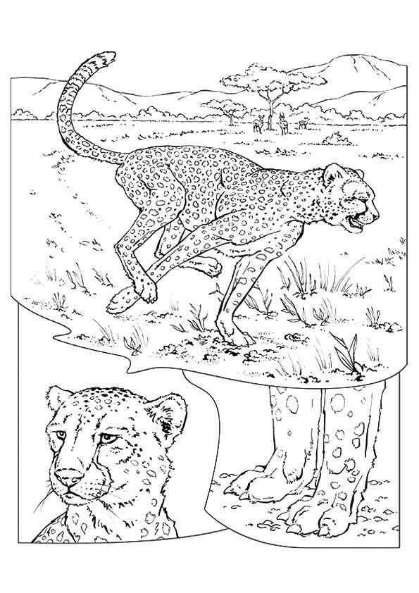 Jungle & Cheetah