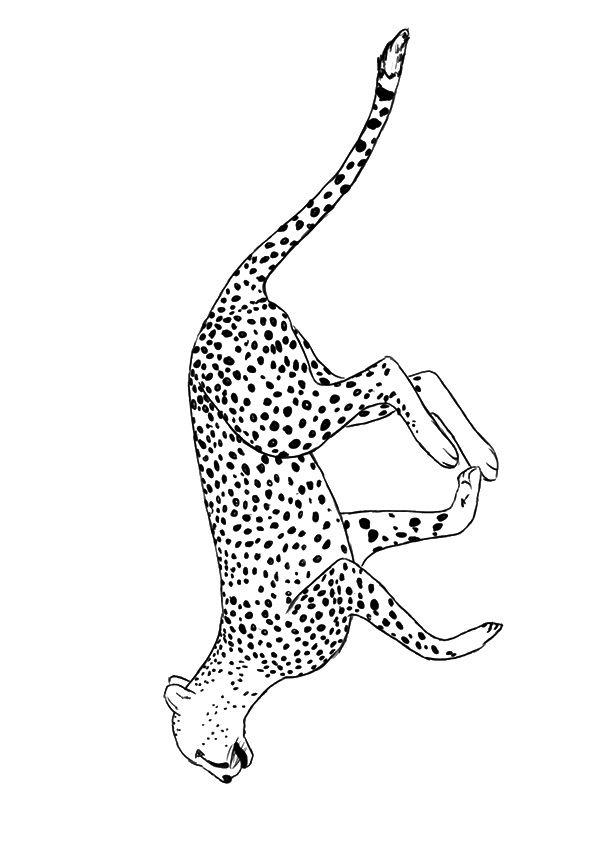 Running Cheetah 2
