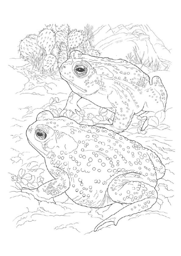 Desert Toad coloring pages