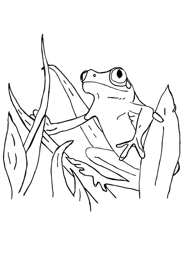 Surinam Frog coloring pages