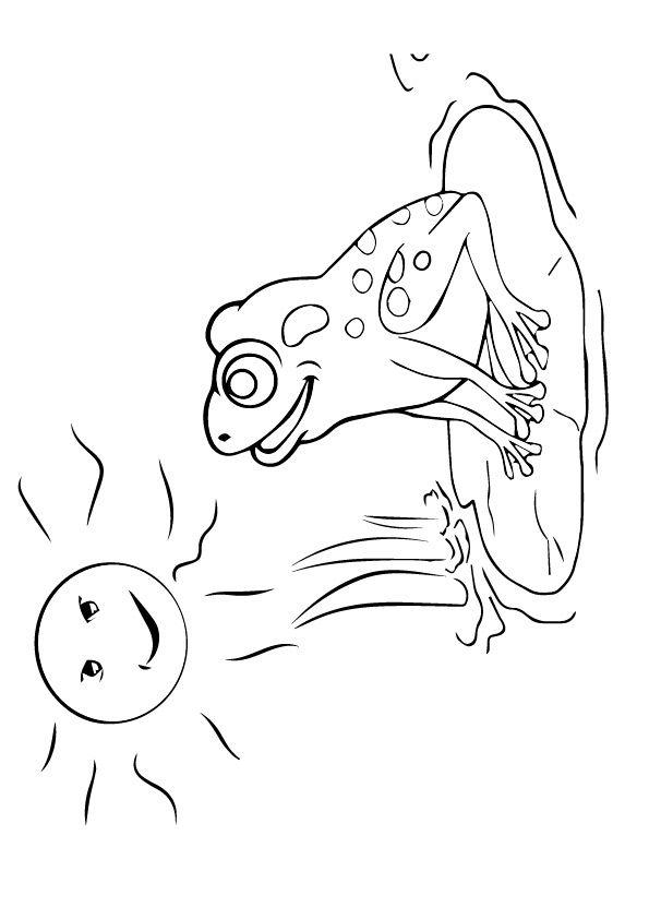 Sun-bathing Frog