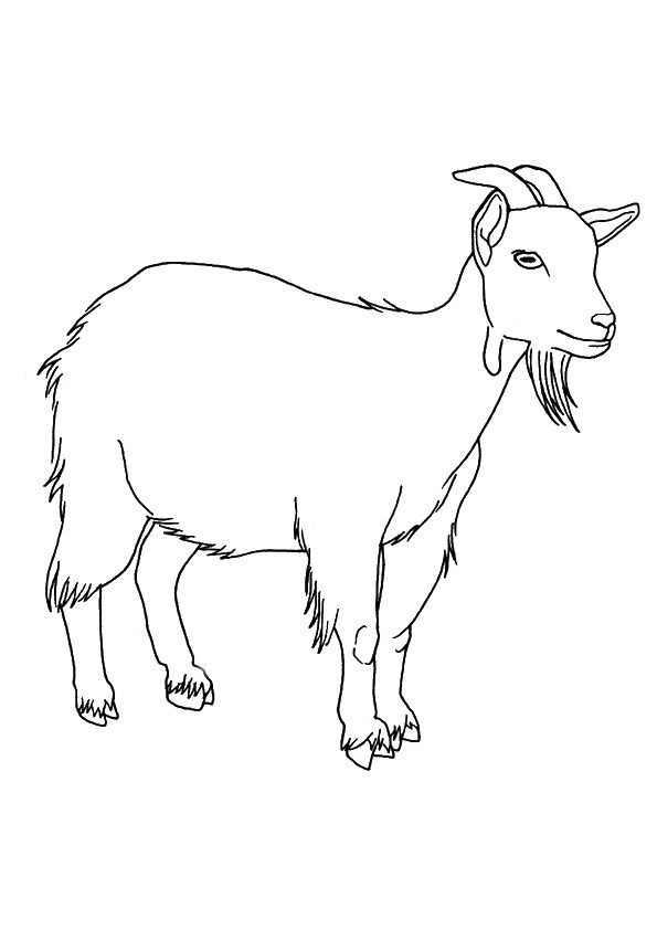 Female Goat coloring pages