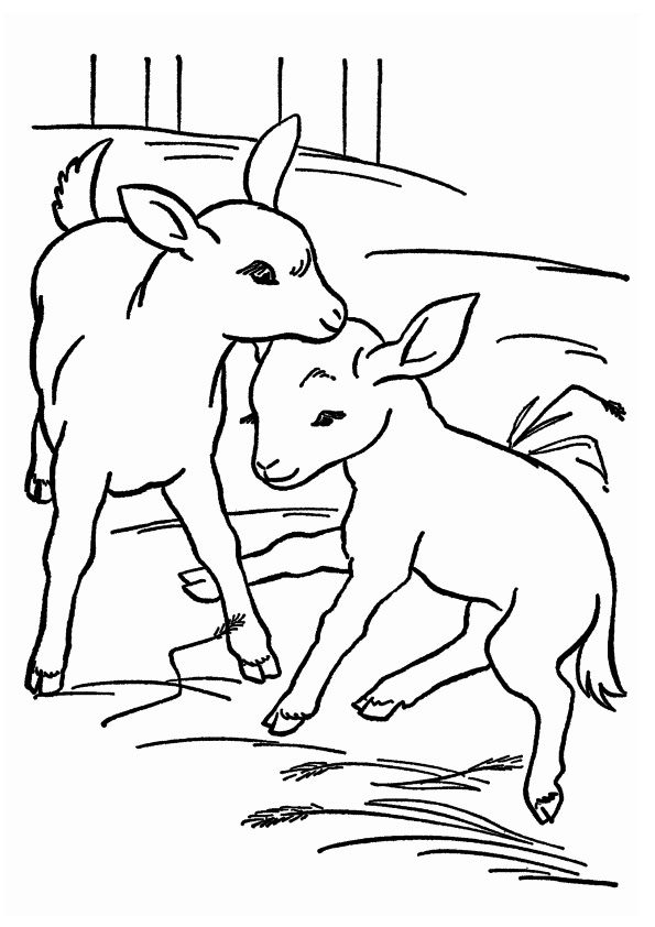 Little Baby Goats coloring pages