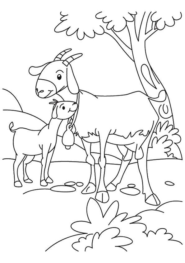 Baby Goat Loving