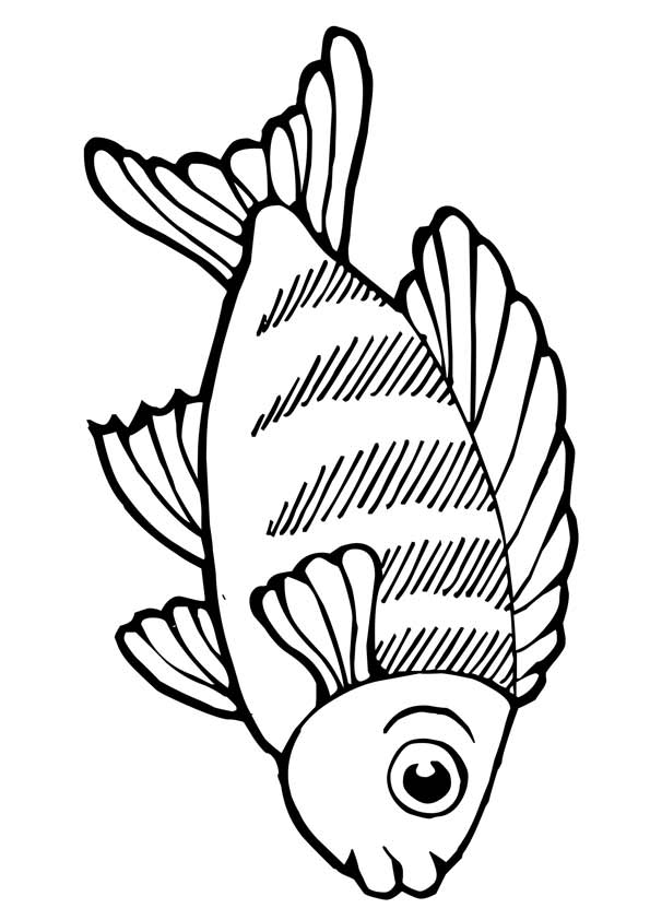 Large Eyes Koi Fish coloring pages