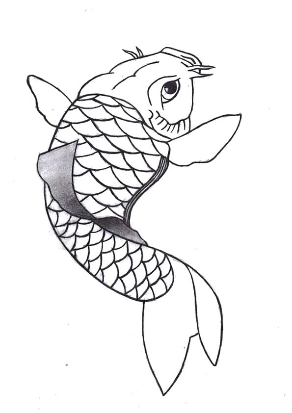 Angellore Koi Fish