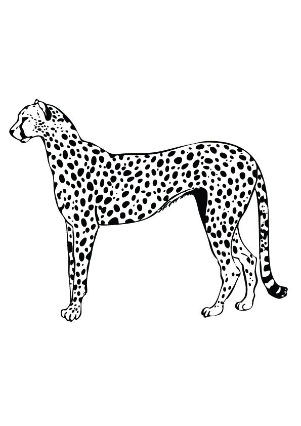 Cheetah Gepard coloring pages