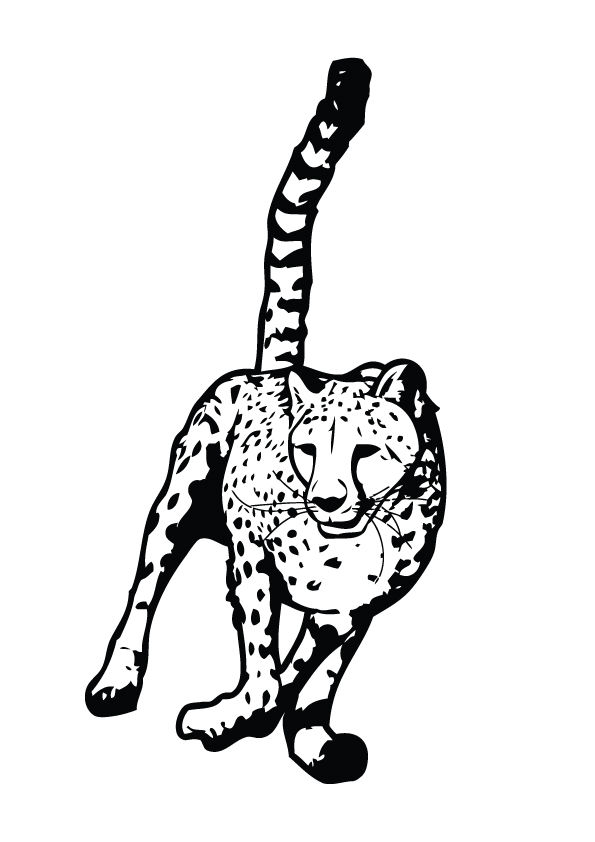Cheetah running coloring pages