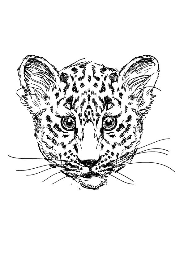 Drawn Cheetah coloring pages