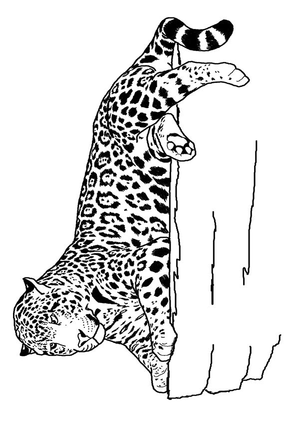 Jaguar Laying coloring pages