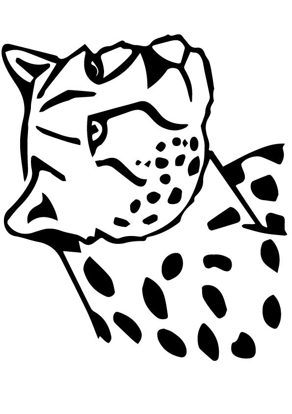 Snow Leopard coloring pages