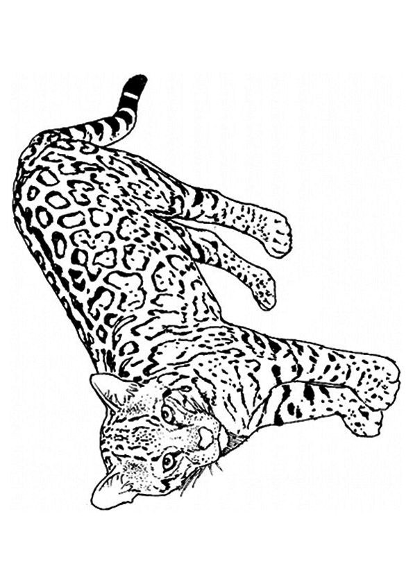 Leopard and Cheetah coloring pages