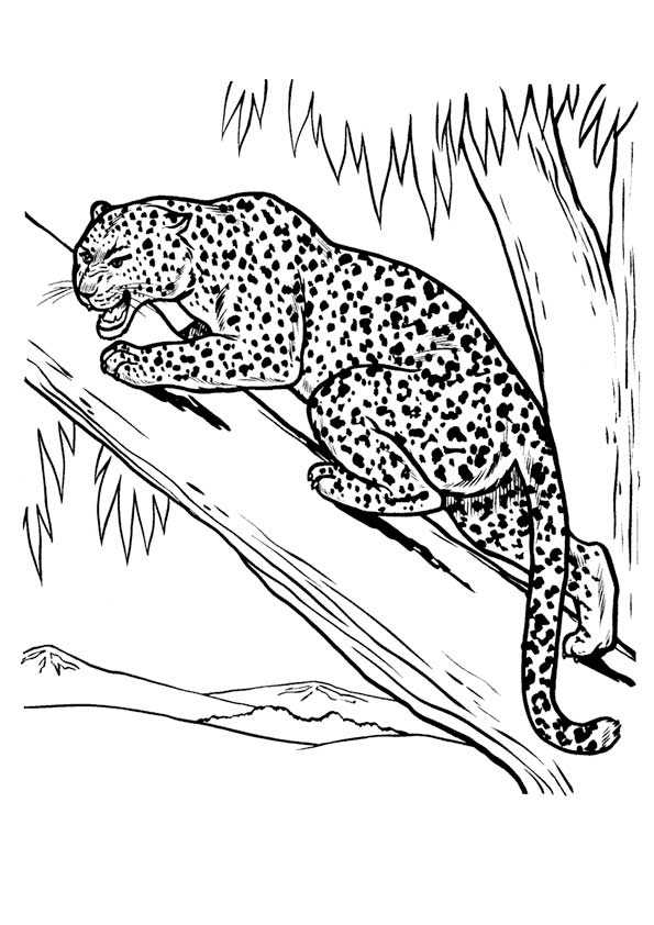 Drawing Leopard coloring pages