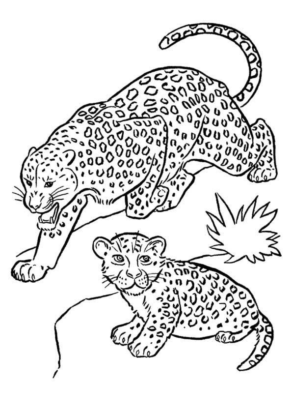 Desenho Felinos