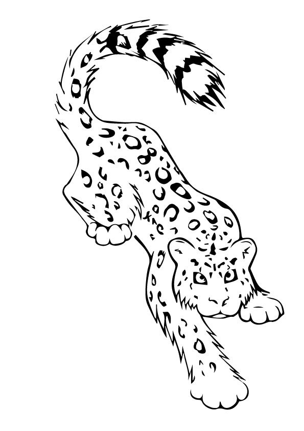 Snow Leopard Tatoo coloring pages