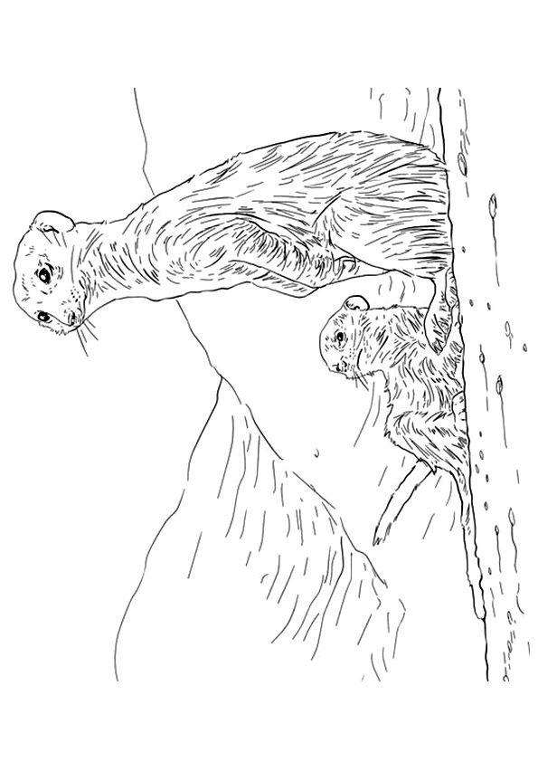 Meerkat Mama & Baby coloring pages