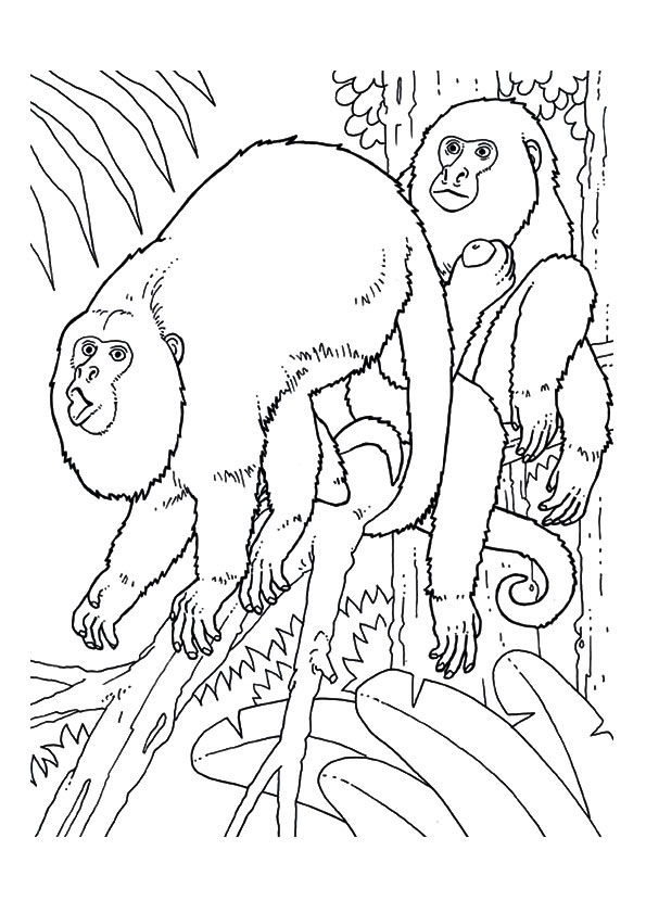 Howler Monkeys coloring pages