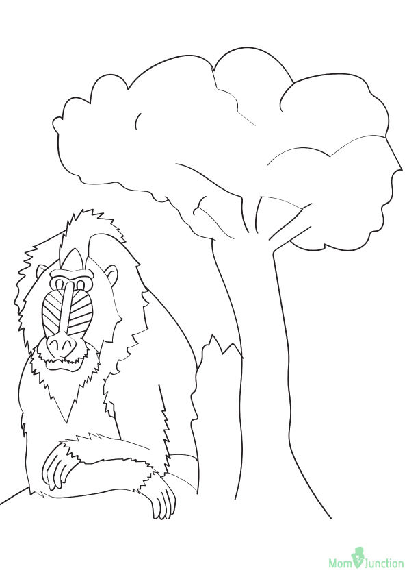 Mandrills Monkey coloring pages