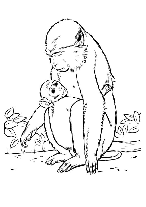 Monkey & Baby coloring pages