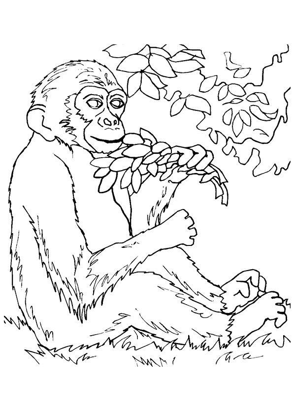 Monkey Eating Plants