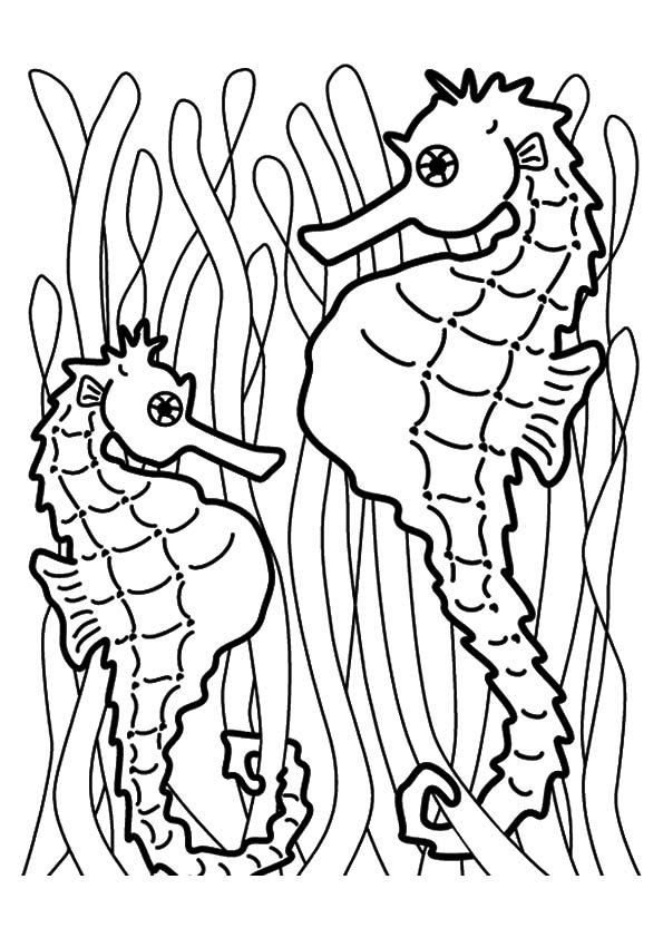 Facing Seahorses coloring pages