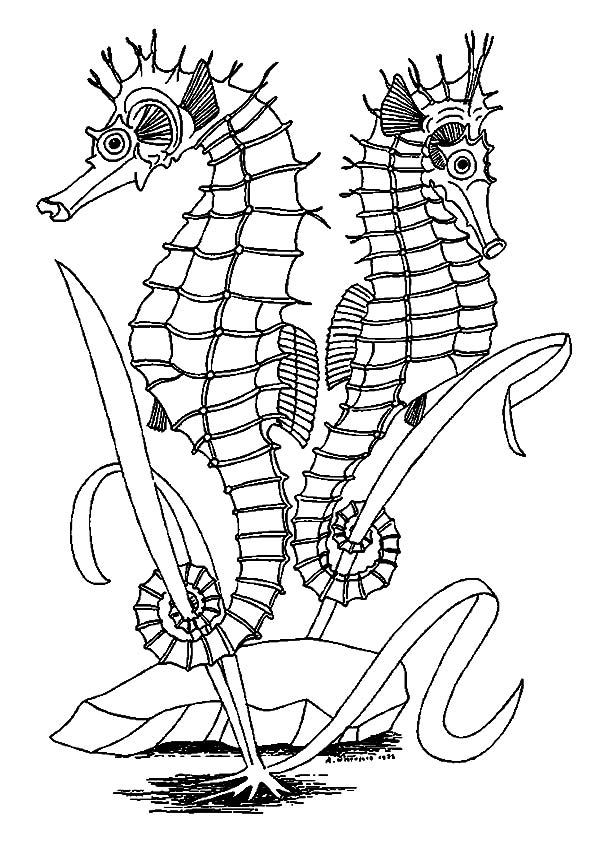 Seahorses Facing Opposite coloring pages
