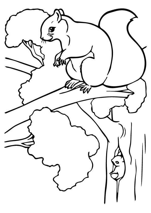 Squirrel Photo coloring pages
