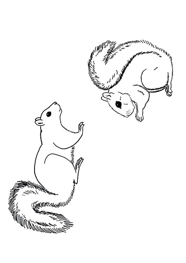 Squirrel Chipmunk coloring pages
