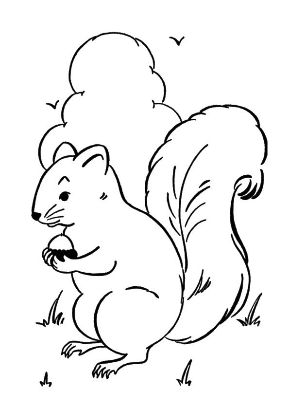 Squirrel Sney coloring pages