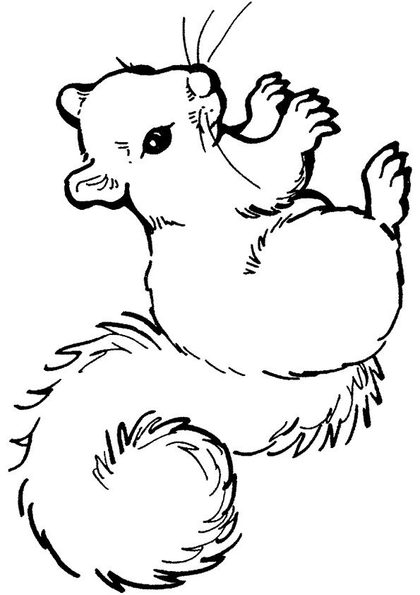 Squirrel Anima coloring pages