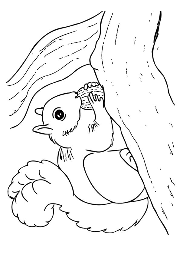 Squirrel On Branch coloring pages