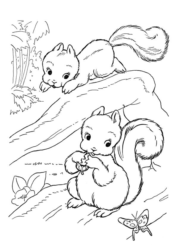 Squirrel Playing coloring pages