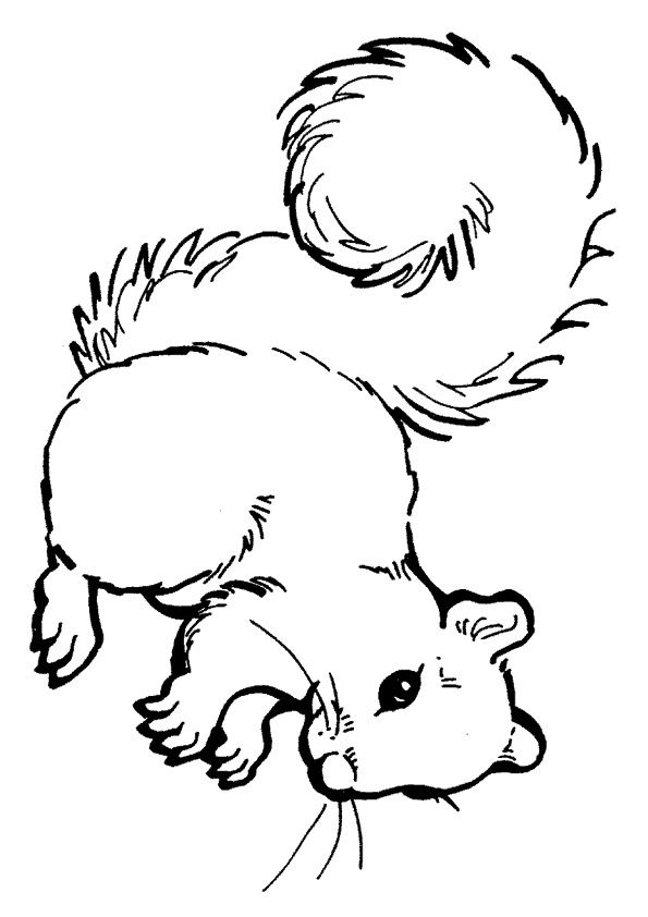 I am squirrel coloring pages