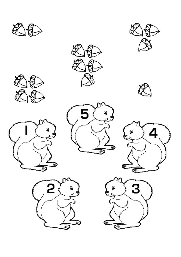 Math fun with squirrels