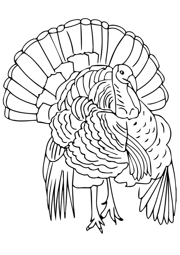 Florida Wild Turkey coloring pages
