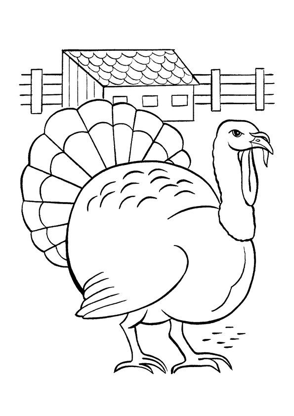 Slate Turkey coloring pages